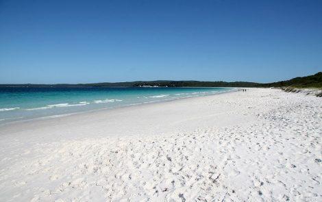 paradisi della biodiversità-Hyams- Australia-setup