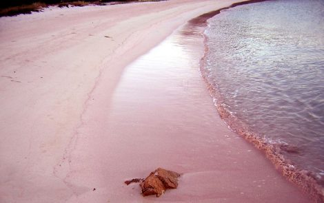 paradisi della biodiversità-spiaggia-rosa-isola di Budelli-setup